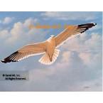 Seagull  - #QOR5  -  PRINT