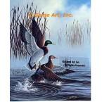 Mallard Ducks  - #QOR6  -  PRINT