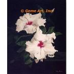 Cherry Blossom Hibiscus  - #ROR806  -  PRINT