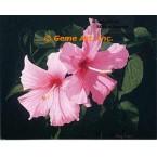 Seminole Pink Hibiscus  - #ROR807  -  PRINT