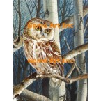 Owl In Birch Trees  - #MORML603-1  -  PRINT