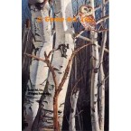 Owl In Birch Trees  - #MOR603  -  PRINT