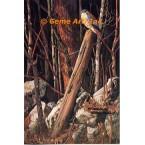 American Kestrel  - #MOR615  -  PRINT