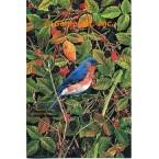 Eastern Bluebird  - #MOR618  -  PRINT