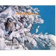 Blue Jay In Snowtree  - #MOR619  -  PRINT