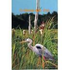 Great Blue Heron  - #MOR621  -  PRINT