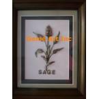 Sage Project #ZOR888