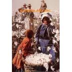 High Cotton  - MOR401  -  PRINT