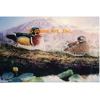 Wood Ducks  - #ROR902  -  PRINT