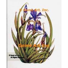 Pacific Coast Purple Irises  - WOR119  -  PRINT