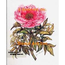 Pink Tree Peony  - WOR129  -  PRINT