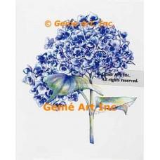 Blue Hydrangeas  - WOR142  -  PRINT