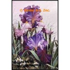 Purple Iris  - RORRB100-1  -  DETAIL PRINT