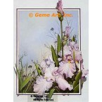 Light Lavender Iris  - ROR107  -  PRINT