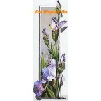 Lavender Iris  - ROR108  -  PRINT