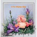 Peach & Lavender Iris  - ROR135  -  PRINT