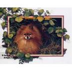 Pomeranian  - ROR143  -  PRINT