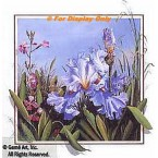 Iris With Fireweed  - ROR162  -  PRINT
