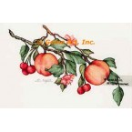 Peaches & Cherries  - #ZOR804  -  PRINT