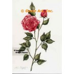 Elegant Rose  - #ZOR825  -  PRINT