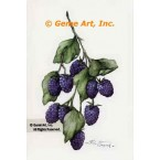 Berries  - #ZOR833  -  PRINT