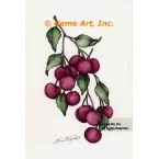 Cherries  - #ZOR835  -  PRINT