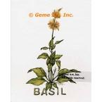 Basil Spice  - #ZOR884  -  PRINT