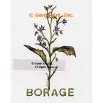 Borage Spice  - #ZOR885  -  PRINT