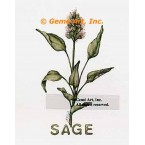Sage Spice  - #ZOR888  -  PRINT