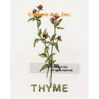 Thyme Spice  - #ZOR889  -  PRINT