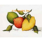 Citrus Fruit  - #ZOR891  -  PRINT