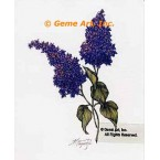 Purple Lilacs  - #ZOR895  -  PRINT