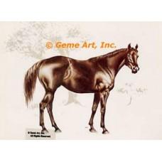 Horse  - HOR3  -  PRINT