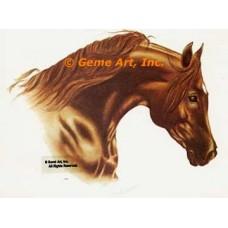 Horse  - HOR4  -  PRINT
