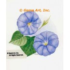 Morning Glories  - #LOR907  -  PRINT