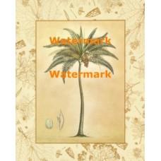 Coconut Palm  - #XXKL10204  -  PRINT