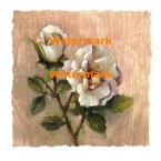 Rose Delight  - #XXKP10004  -  PRINT