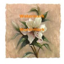 Garden Lily  - #XXKP10005  -  PRINT