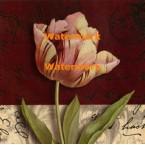Postcard Tulip  - #XXKP11370  -  PRINT