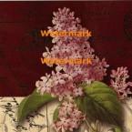 Postcard Lilac  - #XXKP11371  -  PRINT