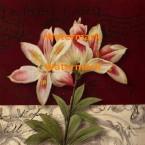 Postcard Lily  - #XXKP11373  -  PRINT