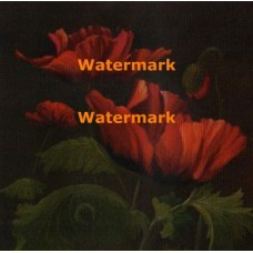 Vibrant Red Poppies II  - #XXKP11728  -  PRINT