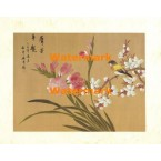 Peony Blossom II  - #XXKL6379  -  PRINT