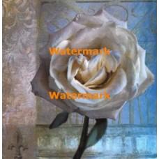 Modern Rose I  - #XXKP20480  -  PRINT