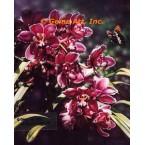 Arboretum II  - #ROR507  -  PRINT