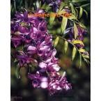 Arboretum Spring III  - #ROR508  -  PRINT