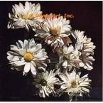 White Daisies  - #ROR501  -  PRINT