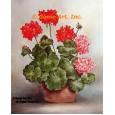 Geraniums In Planter  - #SOR75  -  PRINT