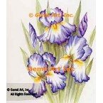 Purple & White Iris  - SOR87  -  PRINT