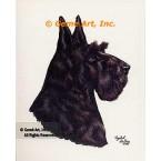 Scotch Terrier  - #IOR113  -  PRINT